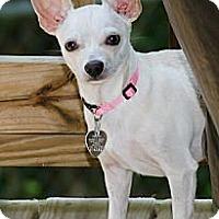 Adopt A Pet :: Sadie - Villa Rica, GA