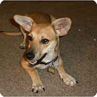 Adopt A Pet :: Ayla - Scottsdale, AZ
