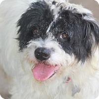 Adopt A Pet :: Cameron-MEET HIM@DogGoneSmart - Norwalk, CT