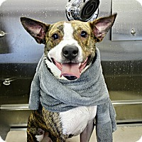 Adopt A Pet :: Shane - Forked River, NJ