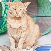 Adopt A Pet :: Gatsby - St. Charles, MO