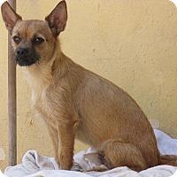 Adopt A Pet :: Simba - San Ysidro, CA