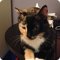 Adopt A Pet :: Torti cat *Courtesy Listing* - New Freedom, PA