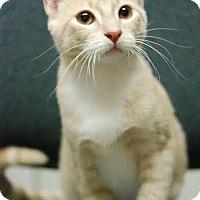 Adopt A Pet :: Hemmy - DFW Metroplex, TX