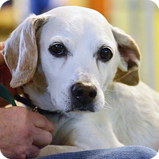 Beagle Mix Dog for adoption in Fishers, Indiana - Robert (special medical needs)