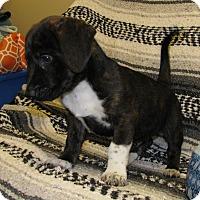 Adopt A Pet :: Doc - Charlemont, MA
