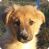 Adopt A Pet :: Zeven - Spring Valley, NY