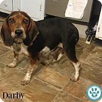 Adopt A Pet :: Darby - Kimberton, PA