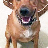 Adopt A Pet :: Kayenne - Courtesy Post - San Diego, CA