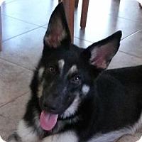 Adopt A Pet :: Elena - Fort Lauderdale, FL