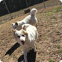 Adopt A Pet :: Snow - Gadsden, AL