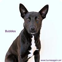 Adopt A Pet :: Bubbles - Needs Foster - Bloomington, MN