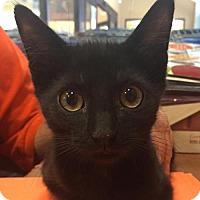 Adopt A Pet :: Vito - Whitehall, PA