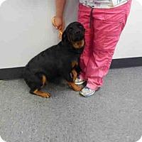 Adopt A Pet :: Bella - Laurel, MT