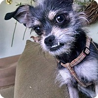 Adopt A Pet :: Stewart - Boise, ID