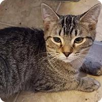Adopt A Pet :: Bob - Toledo, OH