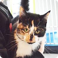 Adopt A Pet :: Judy - Lincoln, NE