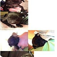 Adopt A Pet :: EmmyLou - Maple Grove, MN