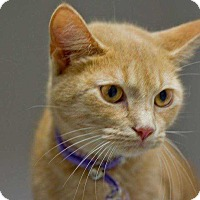 Adopt A Pet :: Rosey - Lexington, TN