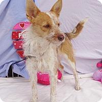 Adopt A Pet :: Venetti - West Chicago, IL