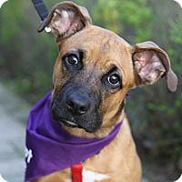 Adopt A Pet :: Jurnee - Pacific Grove, CA