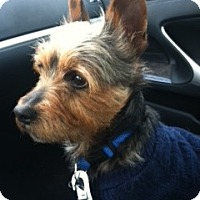 Adopt A Pet :: JOE - Avon, OH