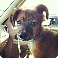 Adopt A Pet :: sebatian - Shirley, NY