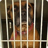 Adopt A Pet :: Charlie URGENT - San Diego, CA