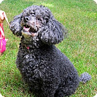 Adopt A Pet :: Duchess - Gig Harbor, WA