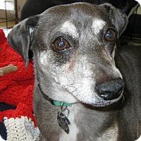 Adopt A Pet :: Penny & Pete - Phoenix, AZ
