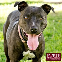 Adopt A Pet :: Roxy - Marina del Rey, CA