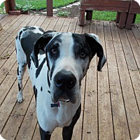 Adopt A Pet :: Falco - Austin, TX