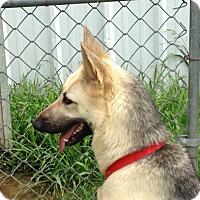 Adopt A Pet :: Gaia - Dripping Springs, TX