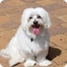 Adopt A Pet :: Jack (VA)