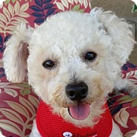 Adopt A Pet :: Stevie - La Costa, CA