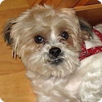 Adopt A Pet :: HAMPTON - Eden Prairie, MN