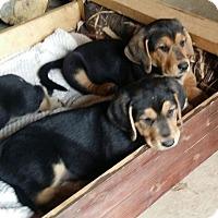 Adopt A Pet :: George & Fred - Huntsville, AL