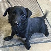 Adopt A Pet :: # 2 Black Jack URGENT! - Carrollton, OH