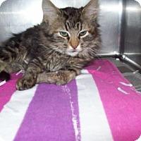 Adopt A Pet :: Izzy - Gulfport, MS