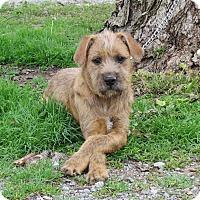 Adopt A Pet :: BRISTOL - Bedminster, NJ
