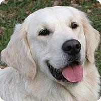 Adopt A Pet :: Katie - Orlando, FL