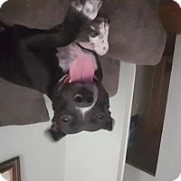 Adopt A Pet :: Natasha - Concord, NH