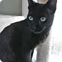 Adopt A Pet :: Zeus - Colmar, PA