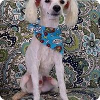 Adopt A Pet :: Oliver - Lawrenceville, GA