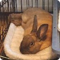 Adopt A Pet :: Mr. Waffles - Woburn, MA