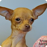 Chihuahua Dog for adoption in Conroe, Texas - Krissy