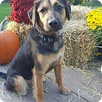Adopt A Pet :: Maddie - Oakland, MI