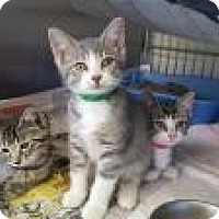 Adopt A Pet :: Chico - Danville, IN