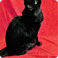 Adopt A Pet :: Morticia - Montgomery City, MO