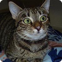 Adopt A Pet :: Aimee - Hamburg, NY
